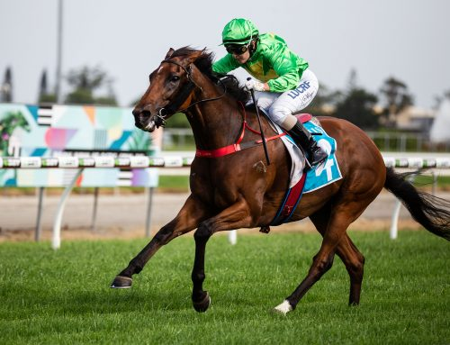SILK STOCKING DRAWS TOP FIELD