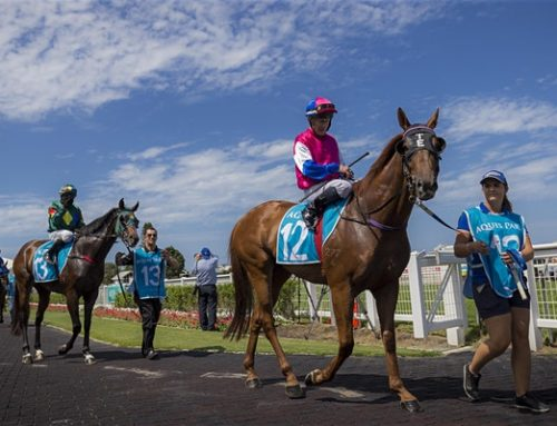 Gold Coast and Beaudesert racecourses implement patron-free racing